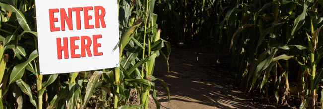 Corn Maze - Plympton, Massachusetts