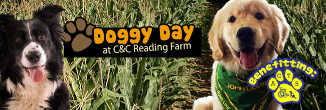 Doggy Day at C&C Reading Farm - Massachusetts