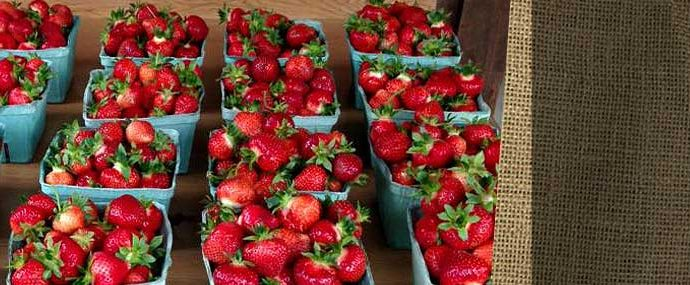 Fresh picked strawberries - Plymouth County, Massachusetts