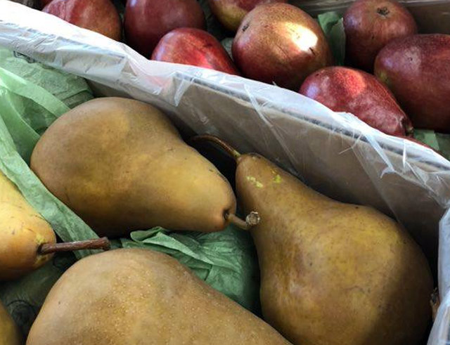 Fresh Produce (Pears, Apples, and more) - Bridgewater, MA