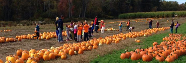 Pumpkin Patch - Plymouth, Massachusetts