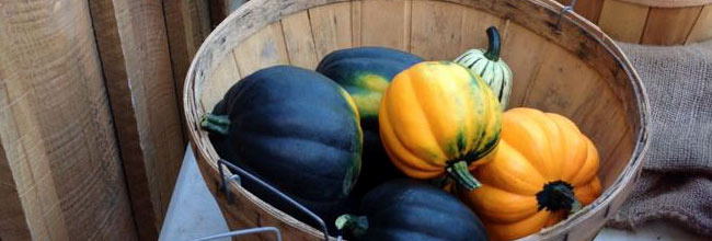 Pumpkins & Squash - Fall at Billingsgate Farm south of Boston, MA