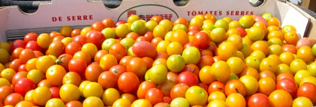 Wholesale Produce - Massachusetts